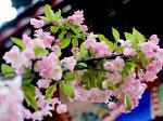 花开校园——春色